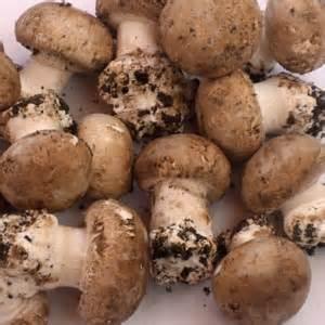 500gr champignons de paris bruns cat1 france au petit jardinet. Black Bedroom Furniture Sets. Home Design Ideas
