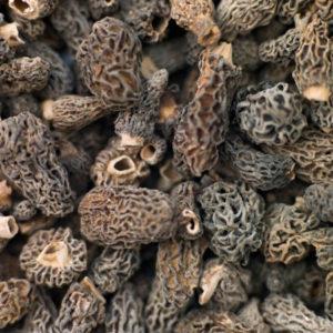 Champignons Morilles séchées