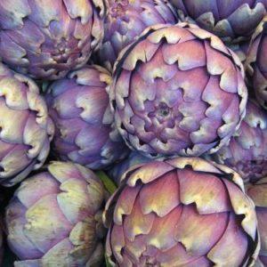 Artichauts poivrade violets