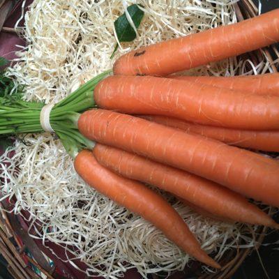 carotte botte