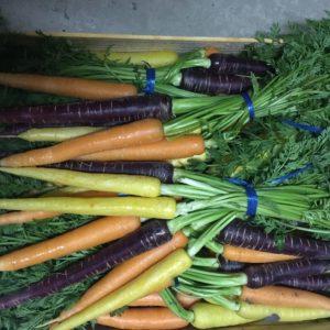 botte carotte multi couleur